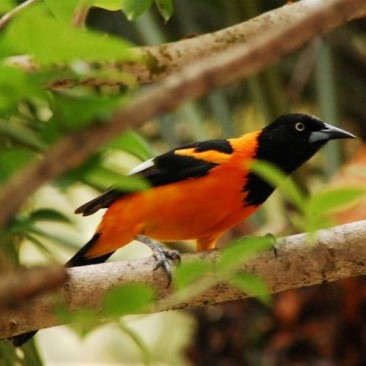 Birdwatching e Trilhas